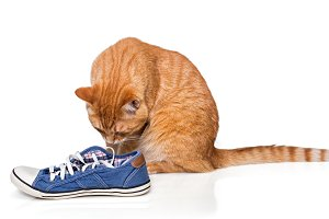 red cat sniffing shoes