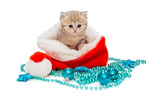 kitten and Christmas toys