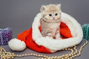 Kitten and Christmas hat