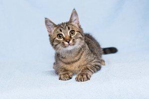 Little curious kitten