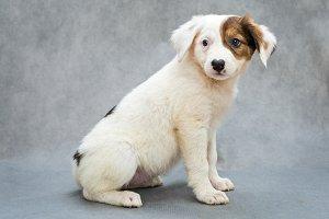 White puppy with an orange spot