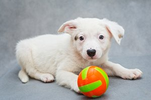 White puppy and ball