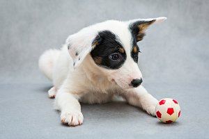 Small white puppy and a toy