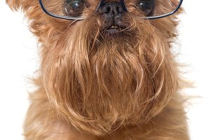 Dog portrait with glasses