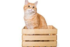 Orange cat sits n a wooden box