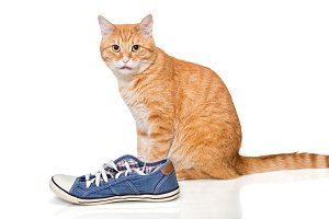 Red cat and blue sneakers