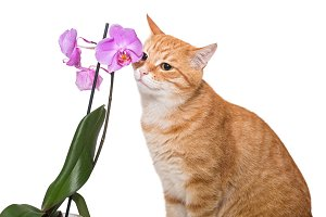 Red cat and an Orchid flower