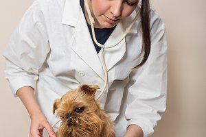 Young women doctor  and dog