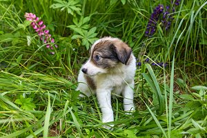 Little puppy sitting in tall grass