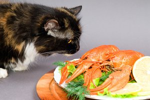 cat examines a plate of Crayfish