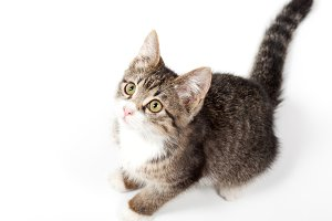 striped kitten sits