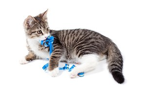 Kitten plays a ribbon
