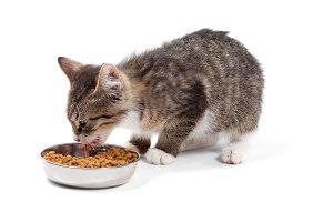 Striped kitten eats a dry feed