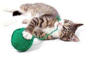 Kitten plays threads
