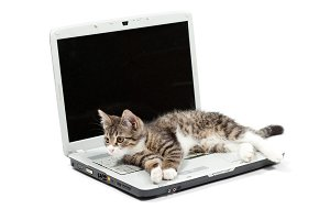 Striped kitten and laptop