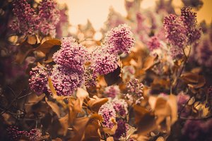Rustic Flowers Stock Photo