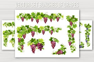 Vector set bunches of grapes