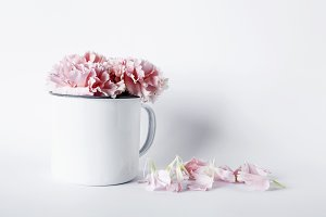 Flowers on white background.