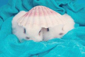 Hidden rabbits