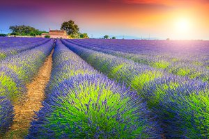 Magical sunset and lavender fields