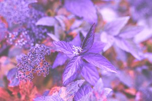 Purple Leaves Stock Photo