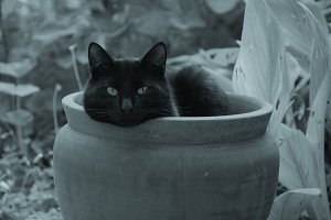 Black Cat Flowerpot