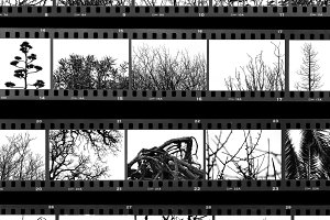 Trees Plants Film