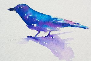 Watercolor of Blue and white bird