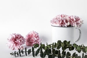 Flowers on white background
