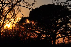 Sunset Branches Abstract