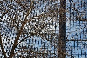 Glass Facade Tree