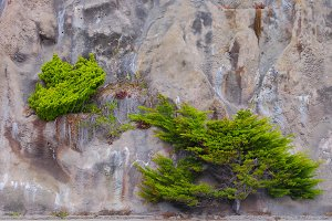 Green trees growing on rocks