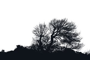 Isolated Tree in white Background