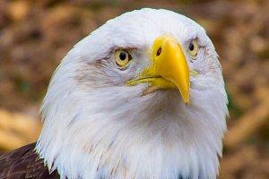 Eagle eye....