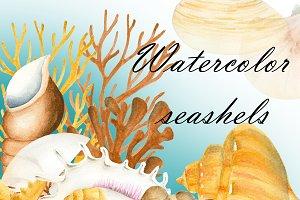 Seashells clipart