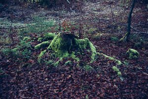 Tree stump with moss and leaves