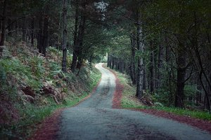 Rural road in a dark pine forest