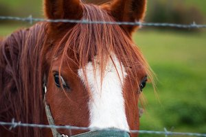 Brown and white horse face portrait