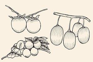 set isolated fruit