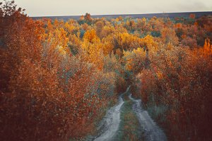 Beautiful autumn forest in  national