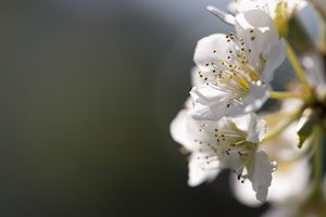 Macro photography of white flowers