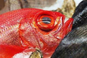 beryx alfonsino fish