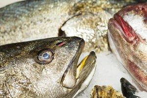 croaker meagre  in fish market