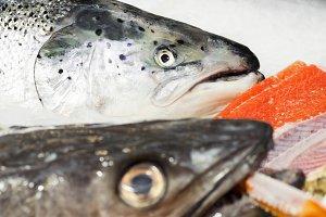 salmon head in fish market