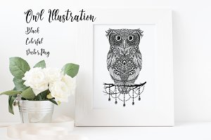 Owl Illustration: Black & Colorful