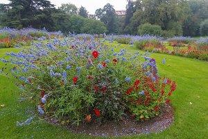 Fflowers in city Park