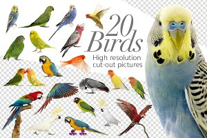 20 Birds - Cut-out High Res Pictures