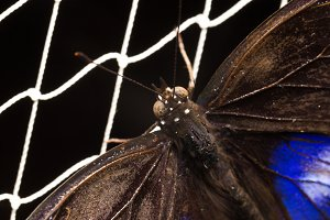 Butterfly on the net