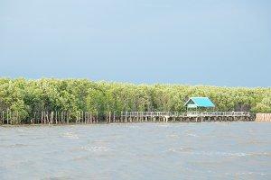 Mangrove forest corridor