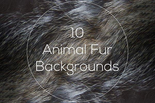 Animal Fur Backgrounds